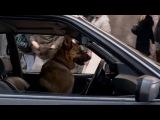 Великолепный пес (Крутой пес) / Cool Dog (2010) (комедия, приключения, семейный)